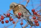 В Северной Осетии началась зимовка птиц