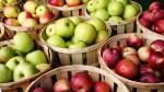 В Моздокском районе заканчивают сбор урожая яблок
