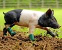 Нет сельскому хозяйству