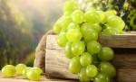 В республике будут развивать виноградарство