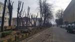 Когда деревья были необрезанными