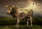 Коровы на войне