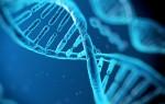 По ДНК