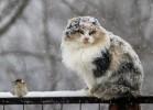 Мокрый снег