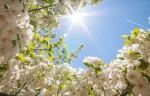 Весна вернется