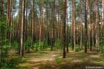 Лесной дозор