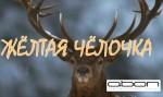 Сомнительные достижения Осетии