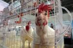 Новая птицефабрика