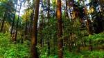 Новые леса